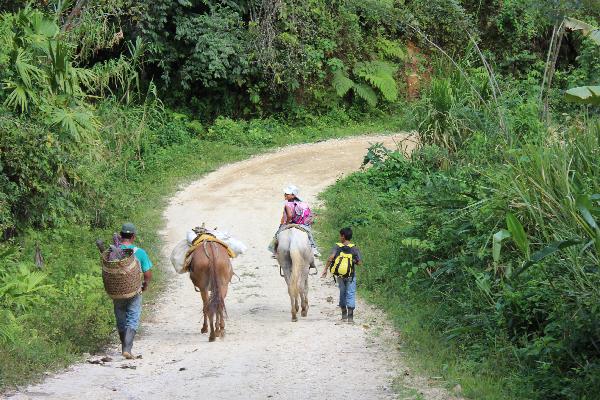 Hike horses