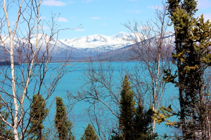 18.Skilak Lake and trees