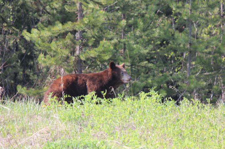 5. The Bear