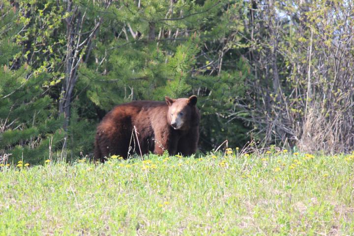 6.The Bear