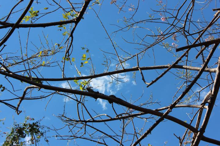 Tunco Sky